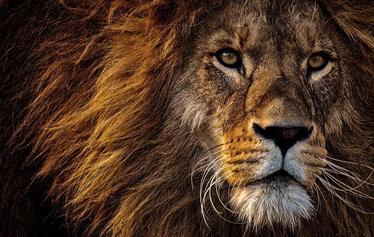 Lion de Juda